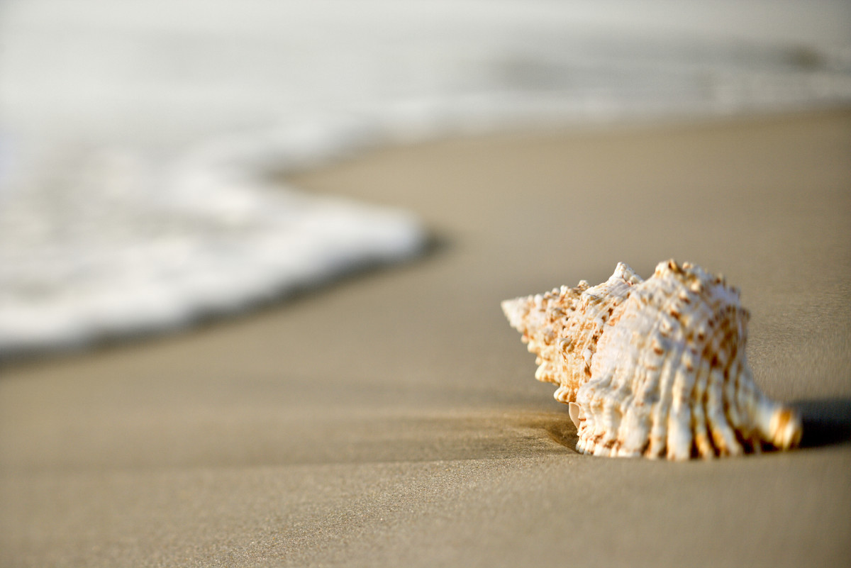 The Road to Freedom can sometimes be as simple as picking up seashells off the beach!