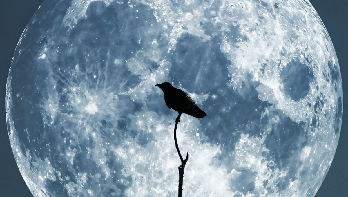 Raven with moon as backdrop