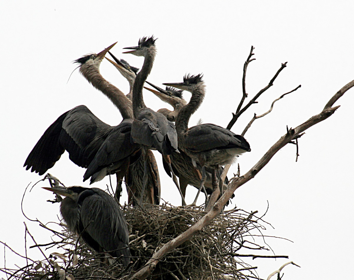 Breeding in their nest.