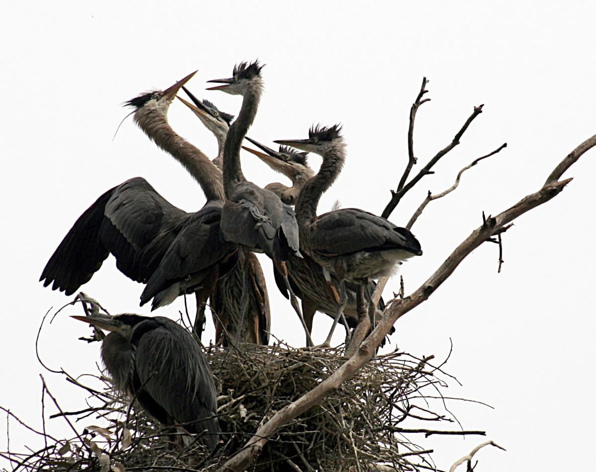 Breeding in their nest.