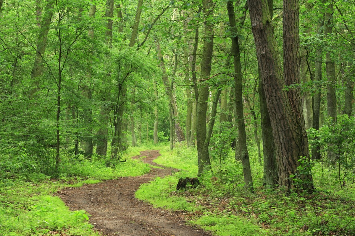 After eating a hardy breakfast, the foot-path to the Perpetual Forest is exact what everyone needs!