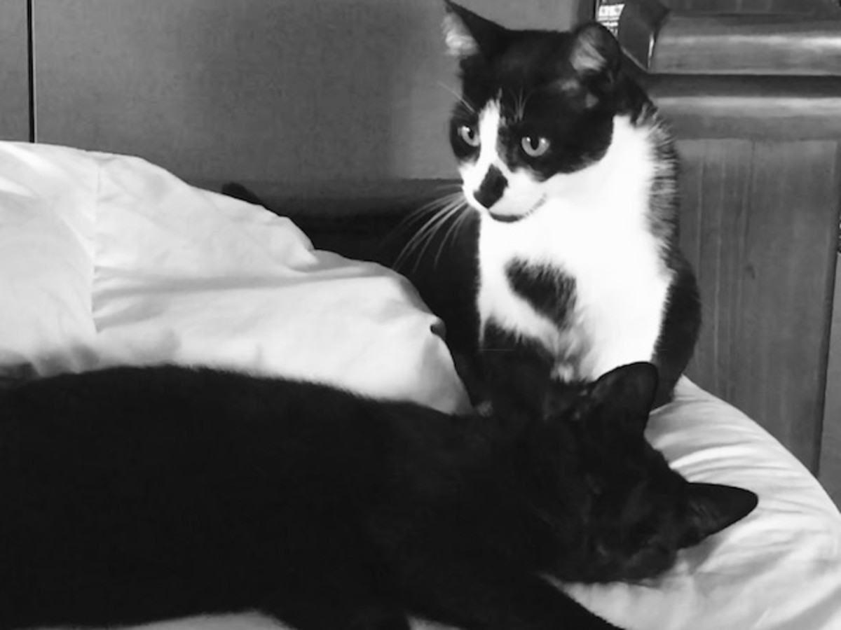 My cats Nike and Chairman Meow (the black one.)
