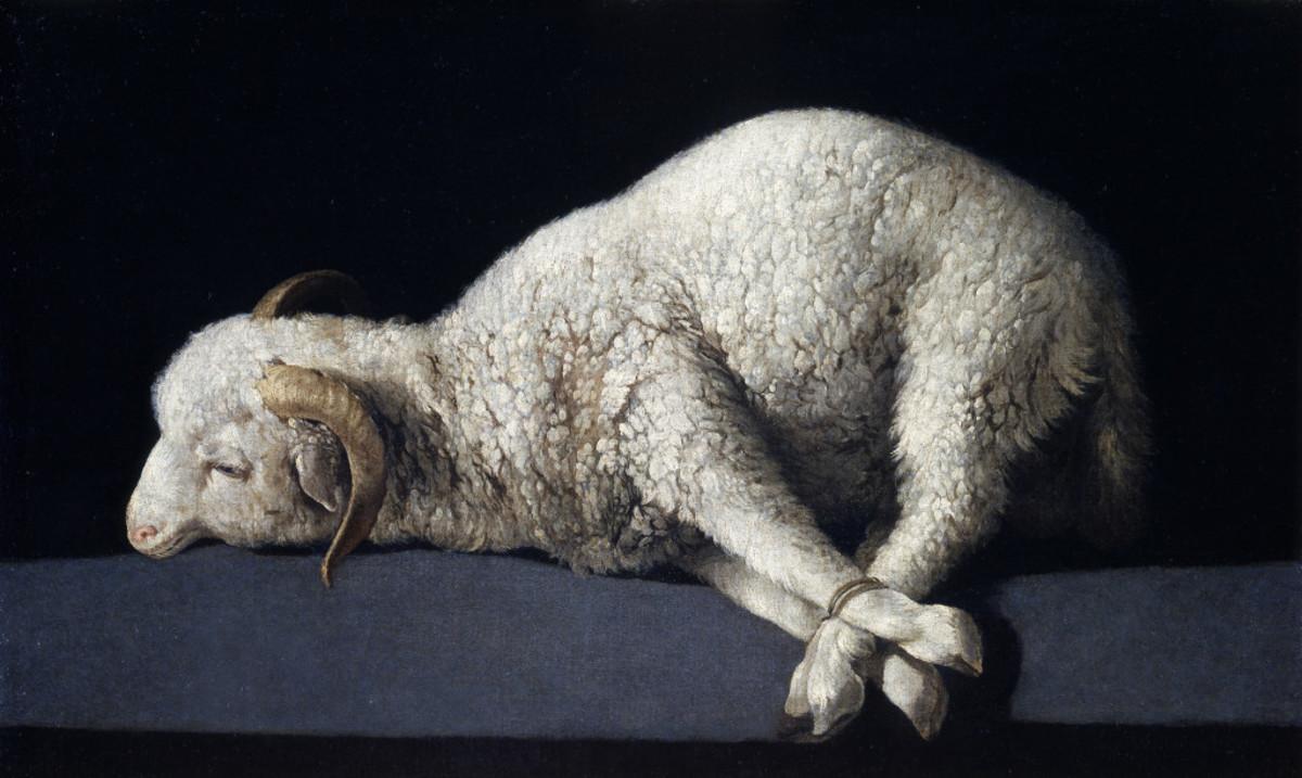 A sheep on an altar ready to be sacrificed