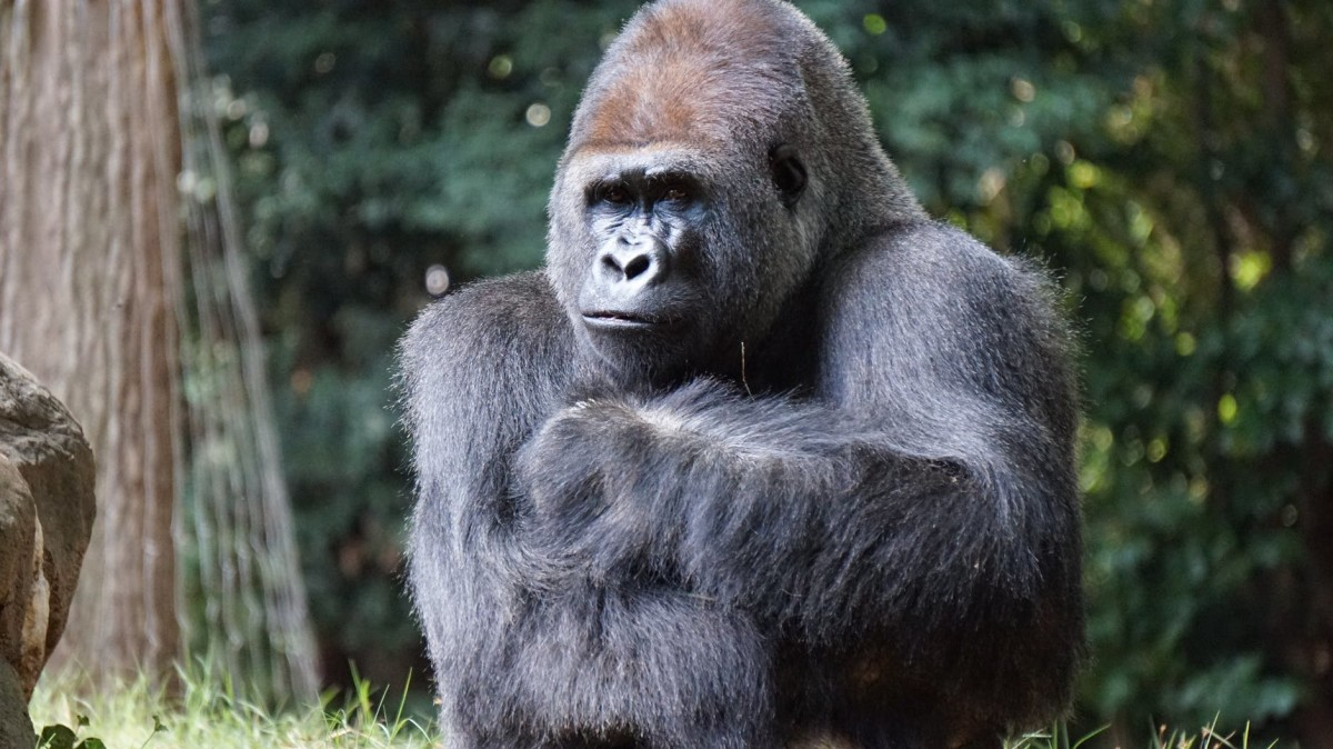 """""""Good-bye, Friends. Thanks For Stopping By To Visit With Us Gorillas."""""""
