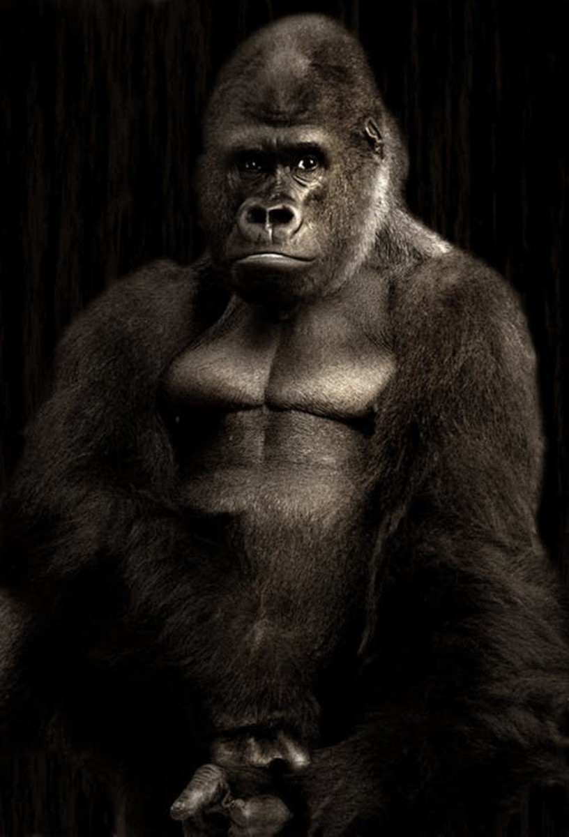 A Gorilla Does Not Know It's Own Strength.