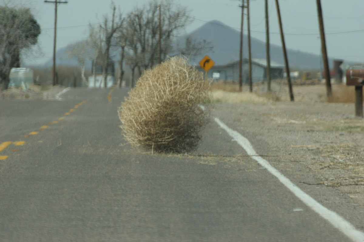 A Fully-Grown Tumbleweed.