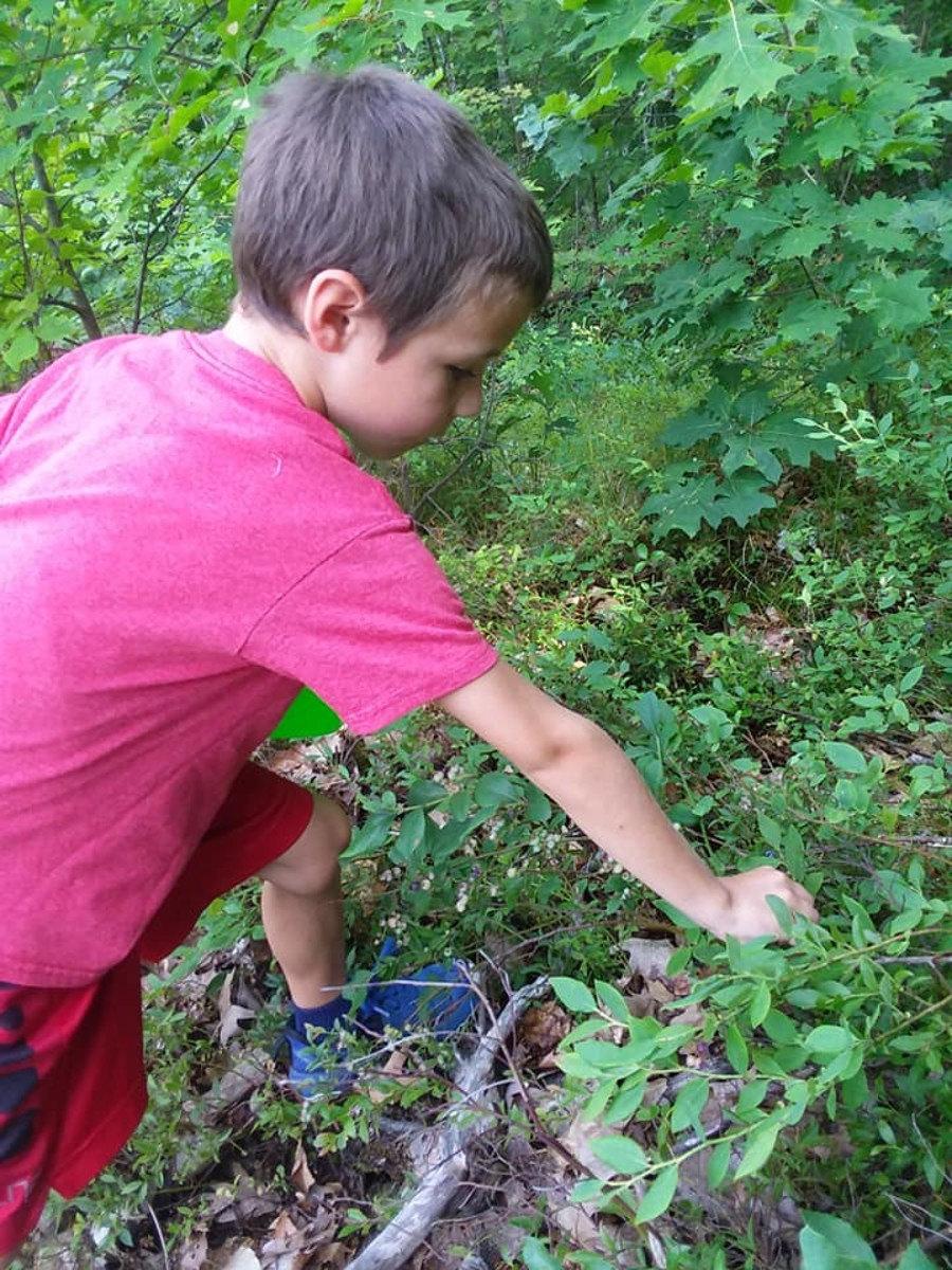 Picking only the best blueberries
