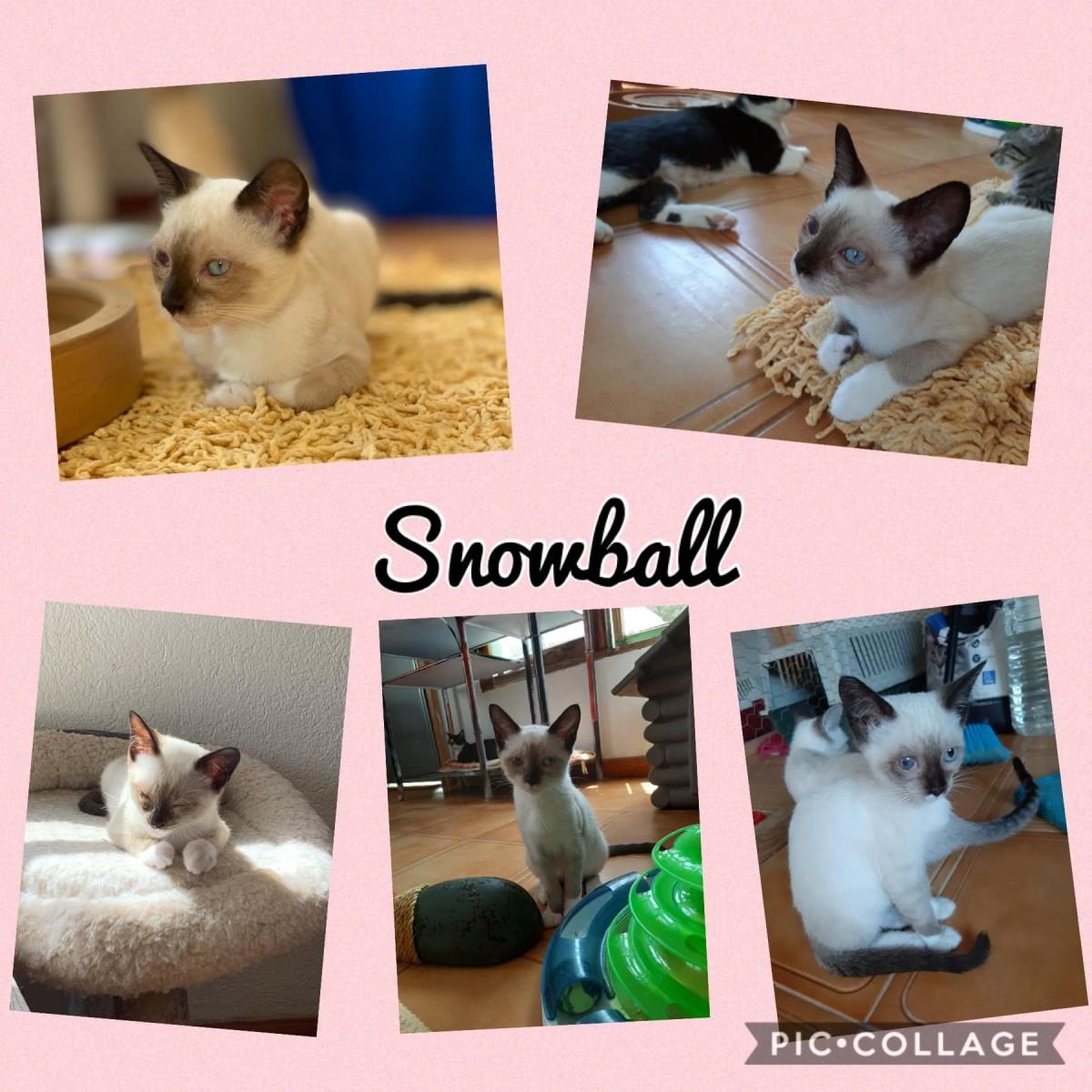 feral-cats-of-playa-blanca-lanzarote-part-three