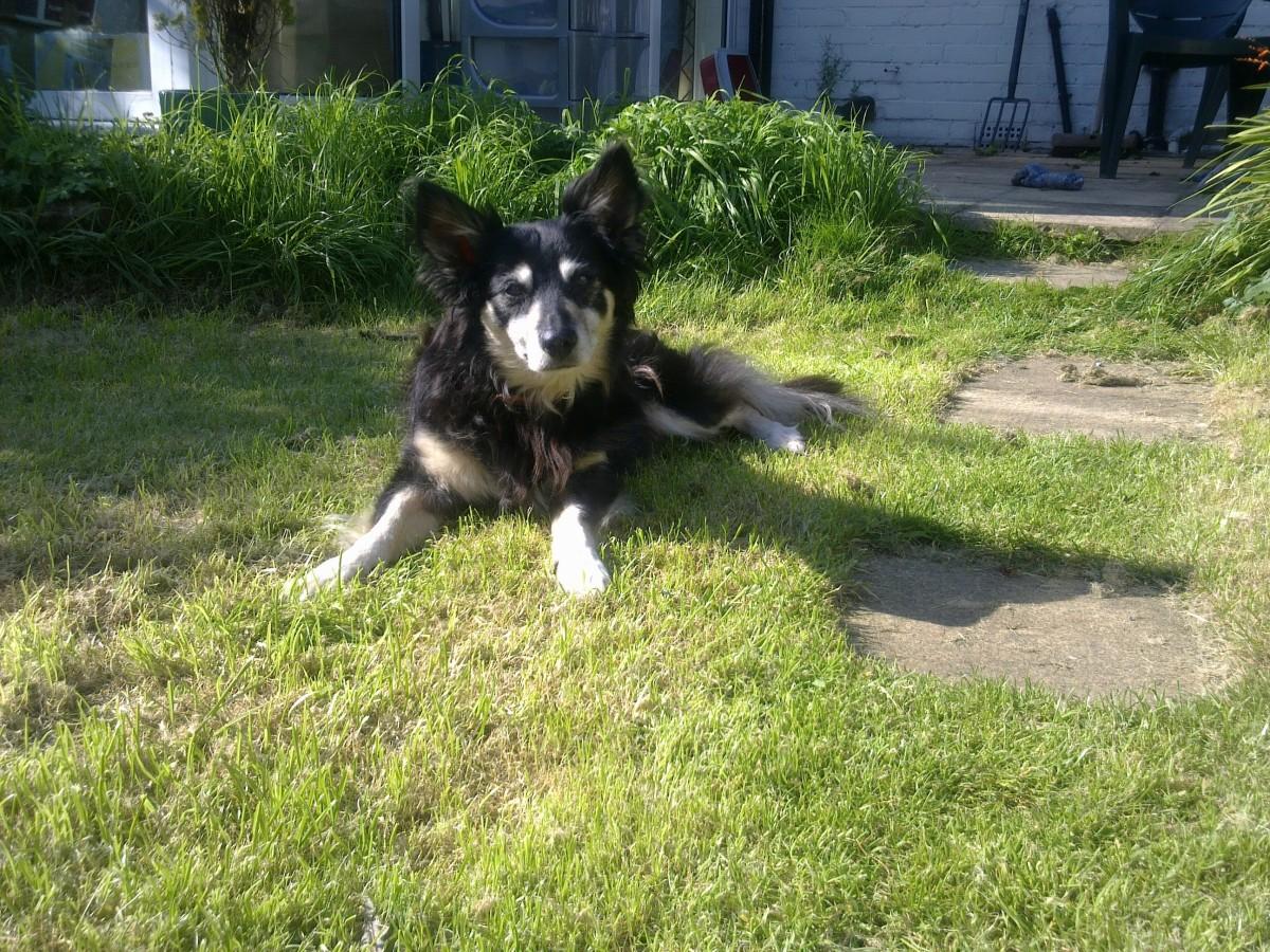 my-companion-my-dog
