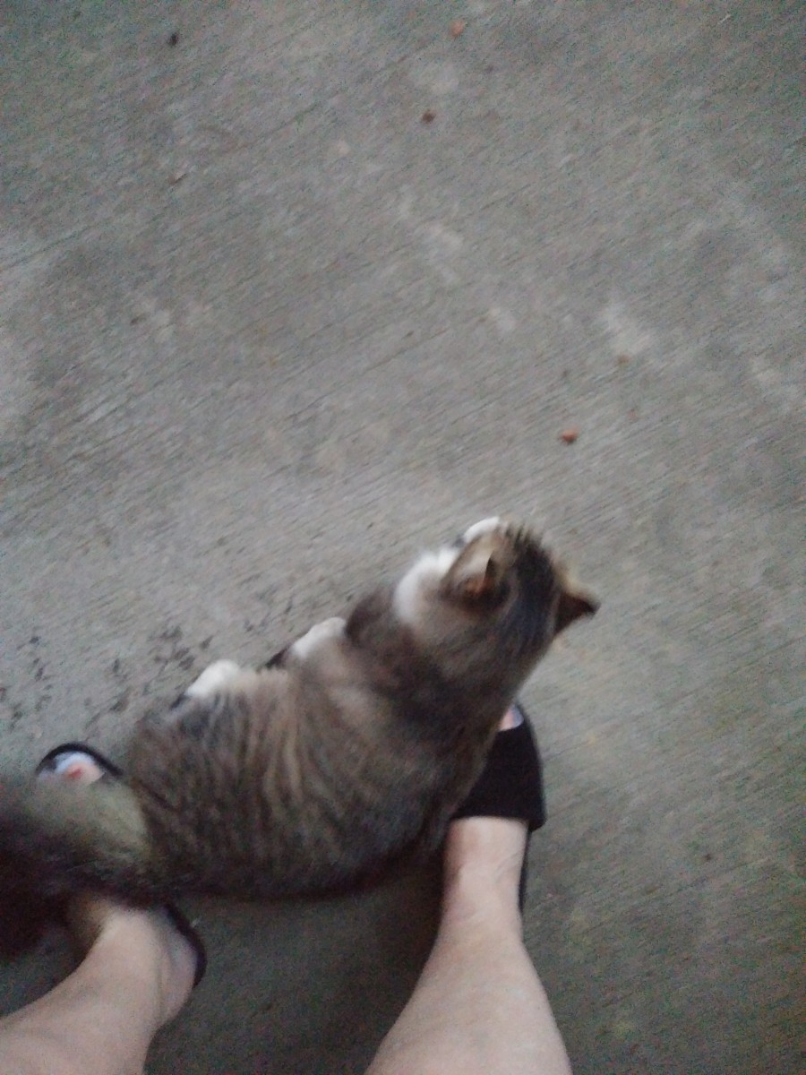padikay-and-kitty-who-is-not-my-kitty-have-a-chat