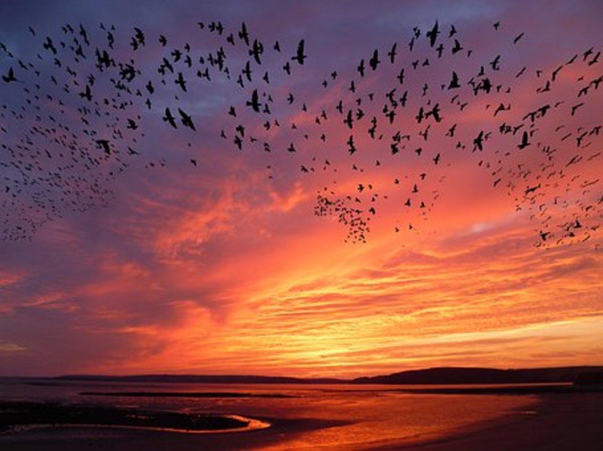 birds-sweet-songs