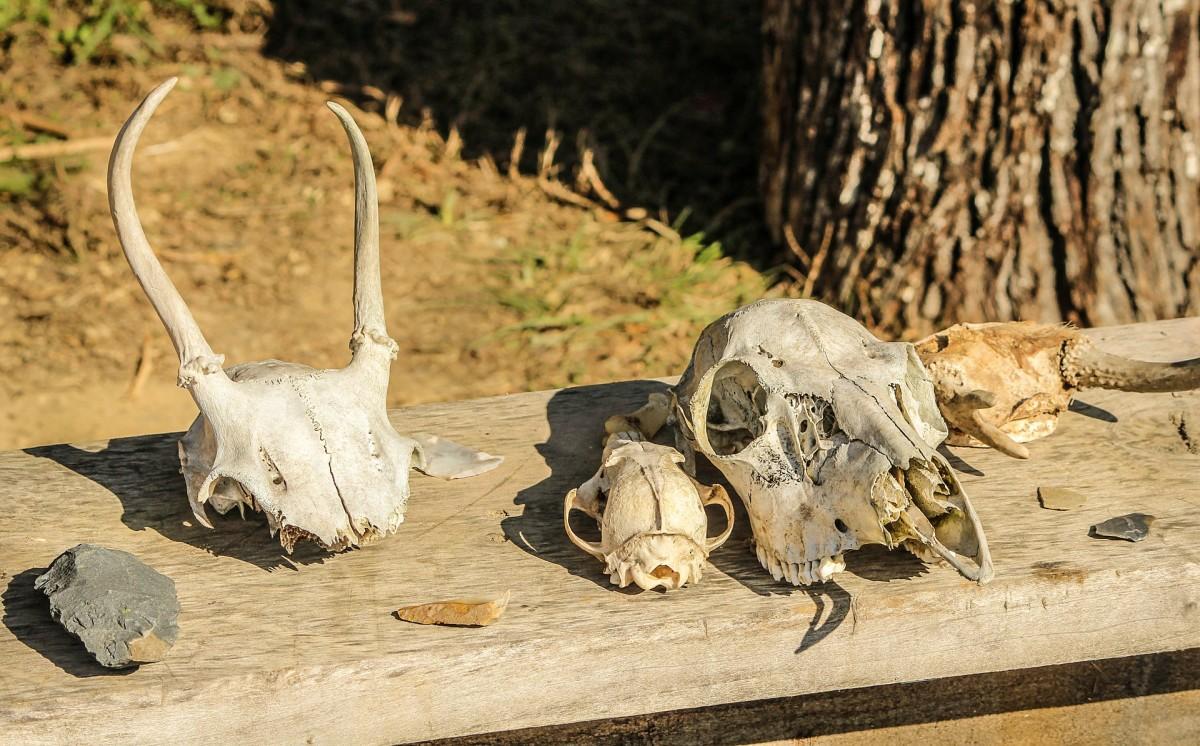 Arrowhead and skulls