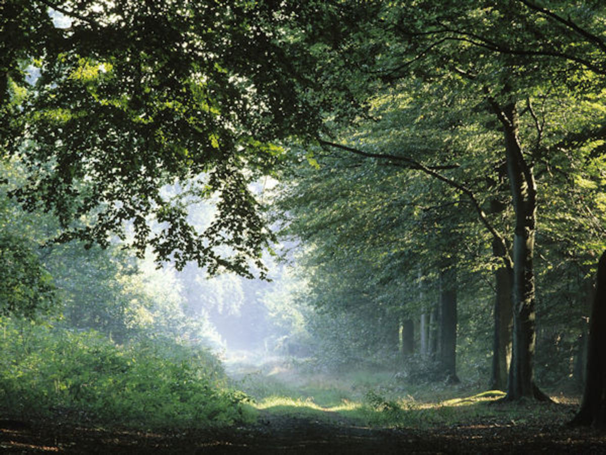 The Perpetual Forest …