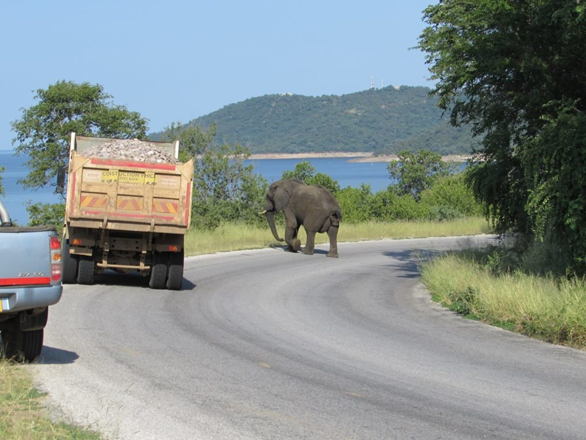 Heavy traffic in Kariba