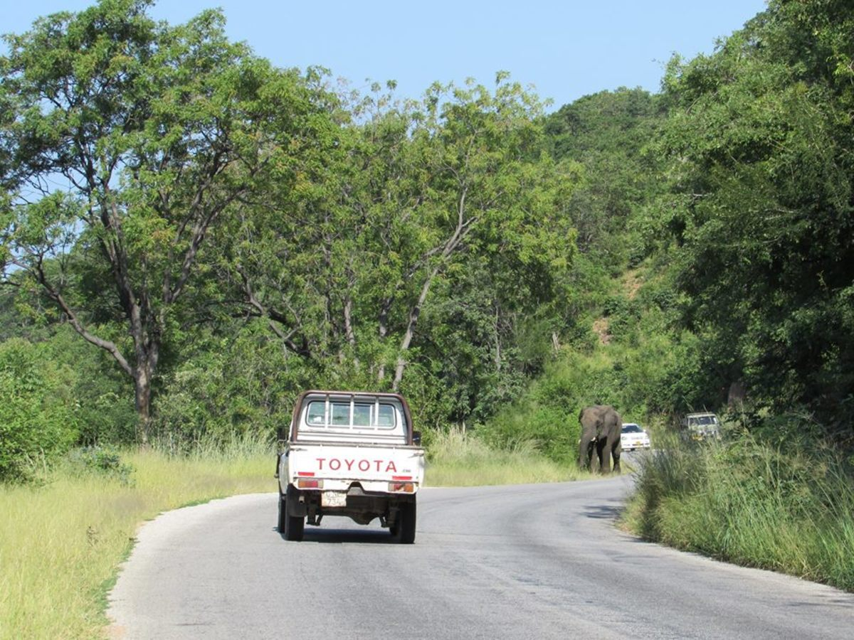 Elephant delays again in Kariba...