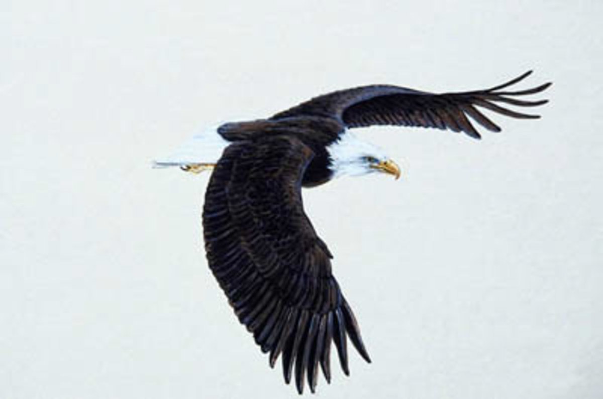 The call of a fish eagle can induce strong emotions in me.