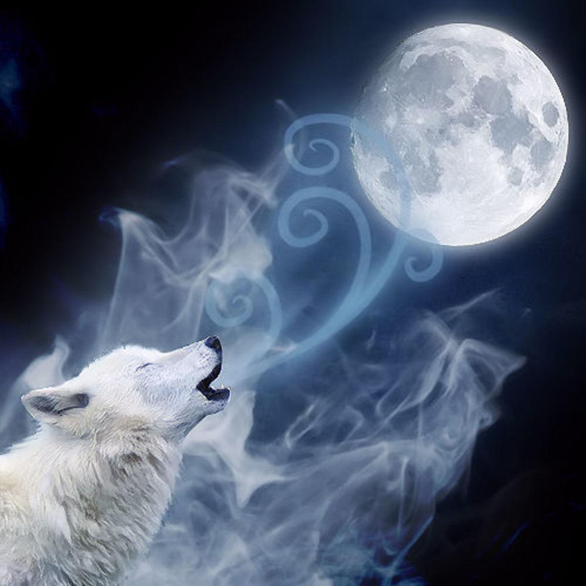 The Spirit of дух волка, Adimarö