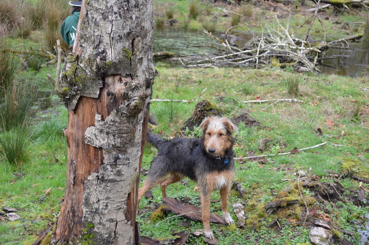 Tobias the Wild One