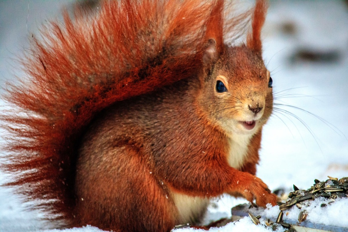 squirrels-natures-mystery