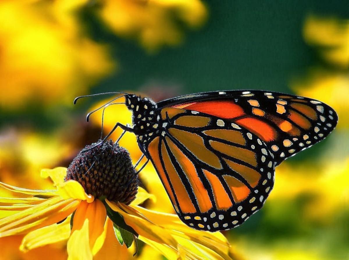 butterflies-a-miracle-of-love-saturdays-inspiration-15-to-john-hansen