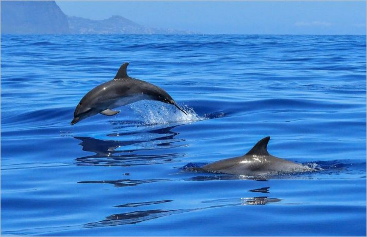 Where the Dolphins Swim - Other Inspirational Writing - to Encourage Peace