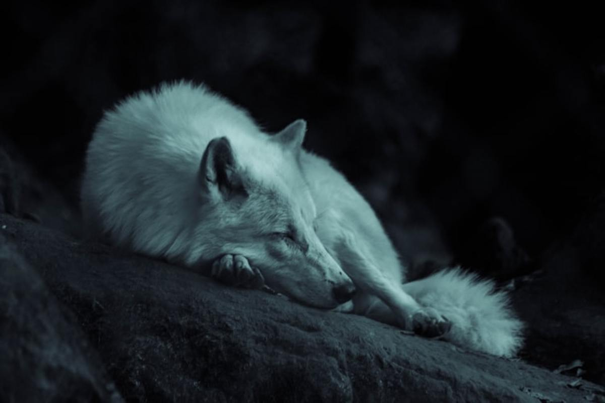 """even warriors need rest."""