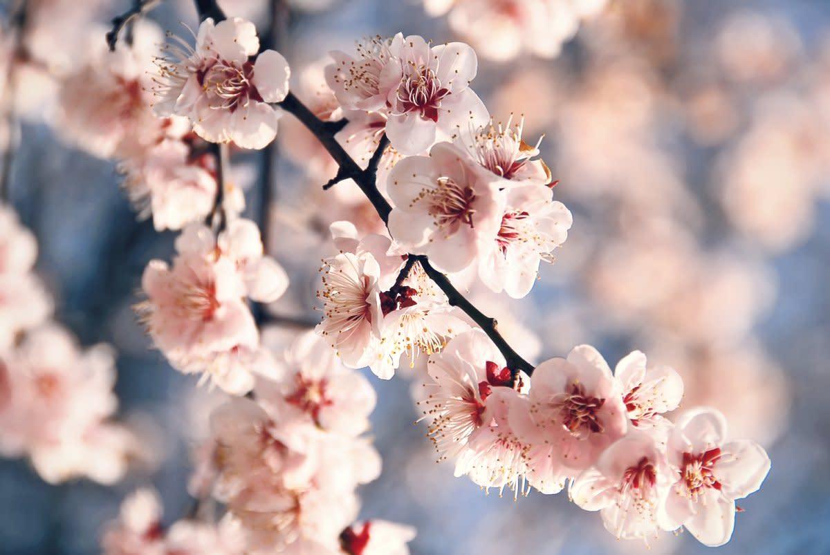 a-walk-through-spring
