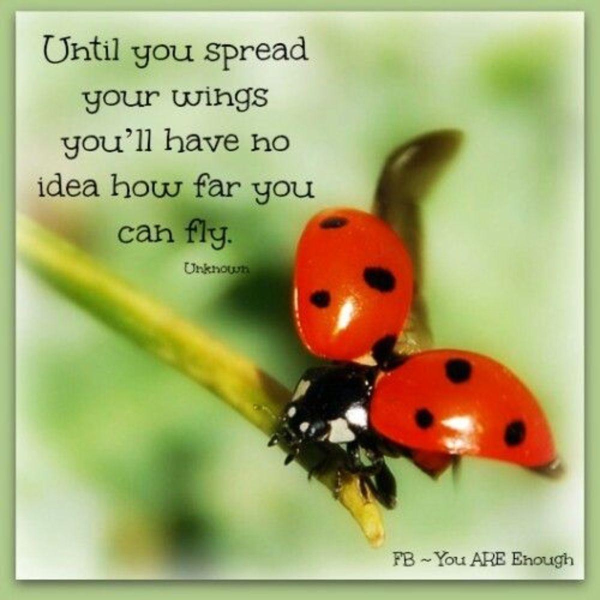ladybug-poetry