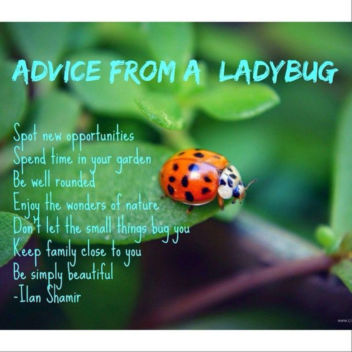 a-ladybug-of-culture