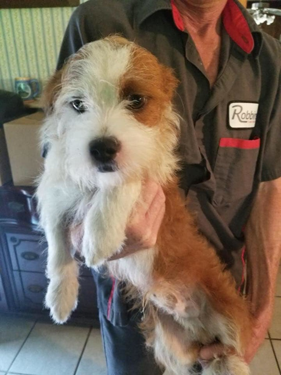 Mookie the dog, then named Luke, at an animal shelter after being taken from a home with about 30 other dogs. Mookie was pulled from the shelter by the rescue group Who Rescued Who, a Montgomery, Texas group that has rescued scores of dogs.