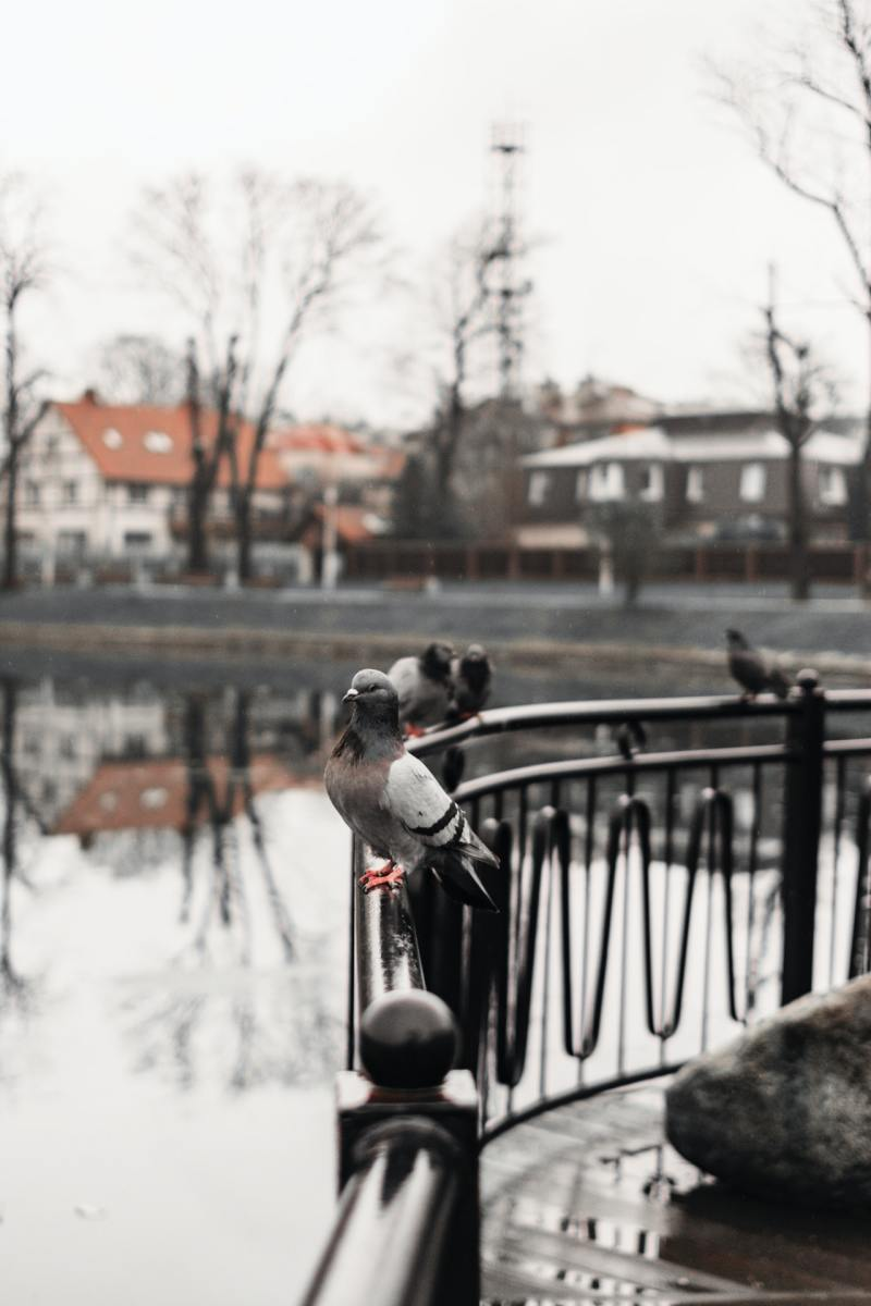 Pigeons: Photo by Artem Saranin from Pexels