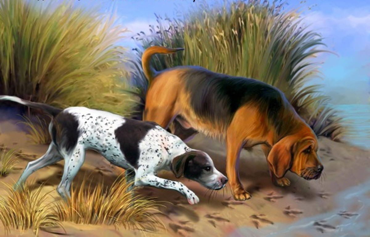 (left) Spot. A Pointer, A Smart Friendly breed of dog.  All-purpose gun-dog, with exceptional skills in game finding, pointing and retrieving. The perfect companion for any game hunter. Always alert, intelligent, a fantastic sense of smell.