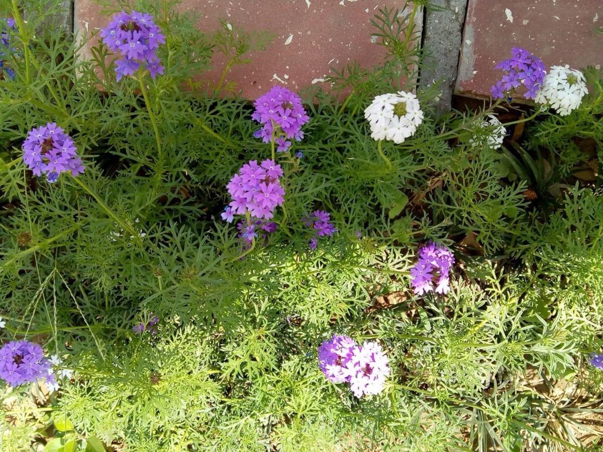 Wildflowers growing alongside a building.