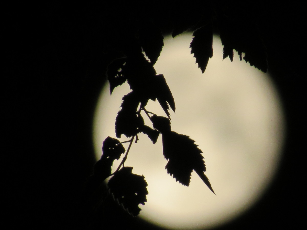 the-enchanting-moonlight-from-above