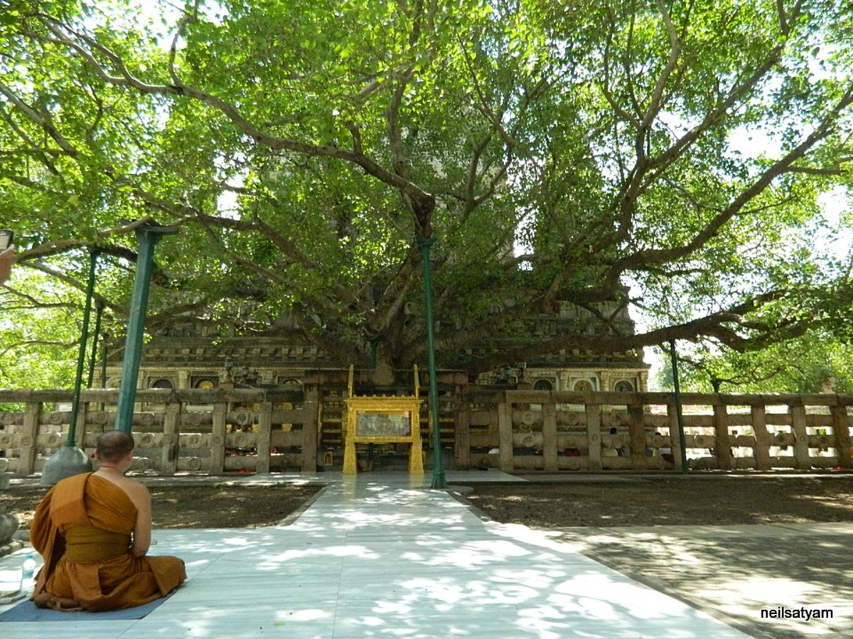 Bodhi tree under which Buddha obtained enlightenment.