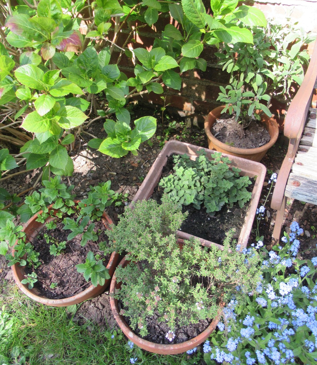 plant some herbs.