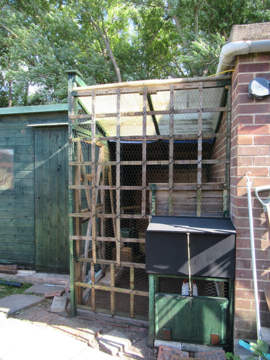 make a chicken coop! (There are always stocks of wood, mesh, plastic.........)