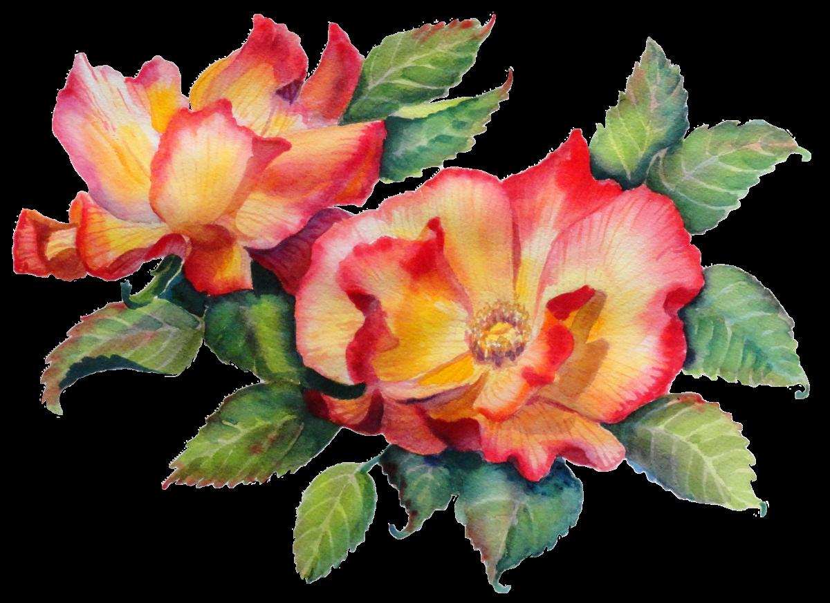 Tea Roses in Watercolor