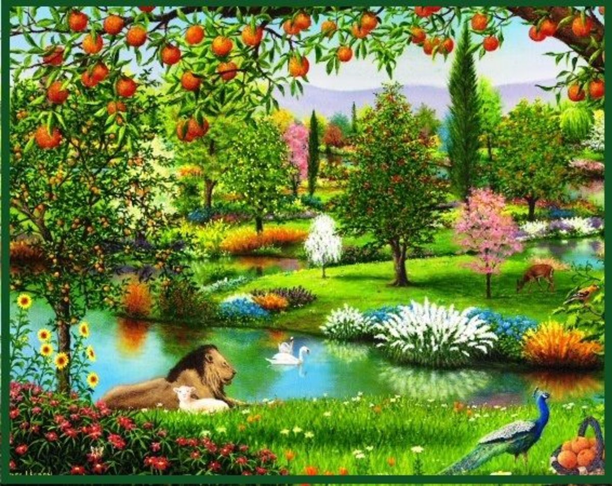 The garden in the cool of the day