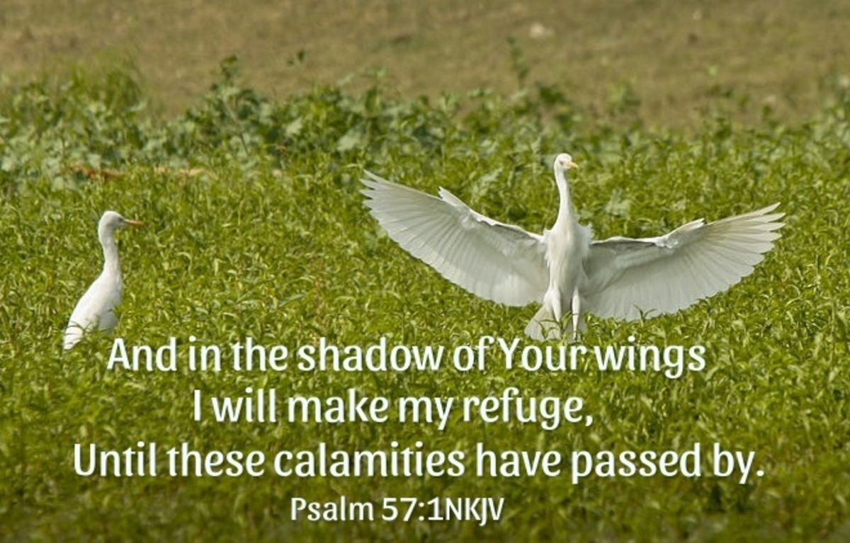 And in the shadow of Your wings I will make my refuge.