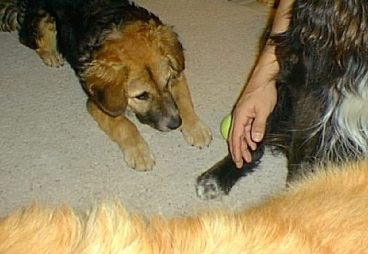 Rusty reached down to the littlest one and let her sniff his hand.