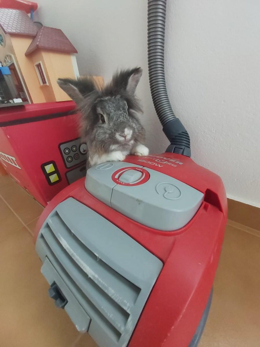 Playing housekeeper