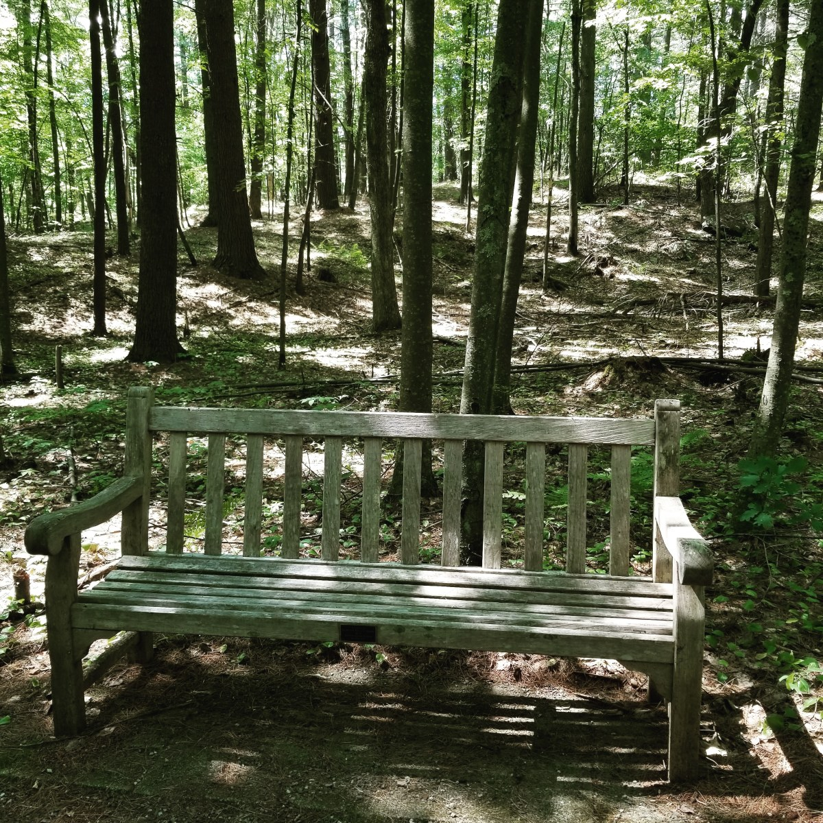 Wooden bench on the forest path.  Perfect place to sit on a sun-dappled summer day.