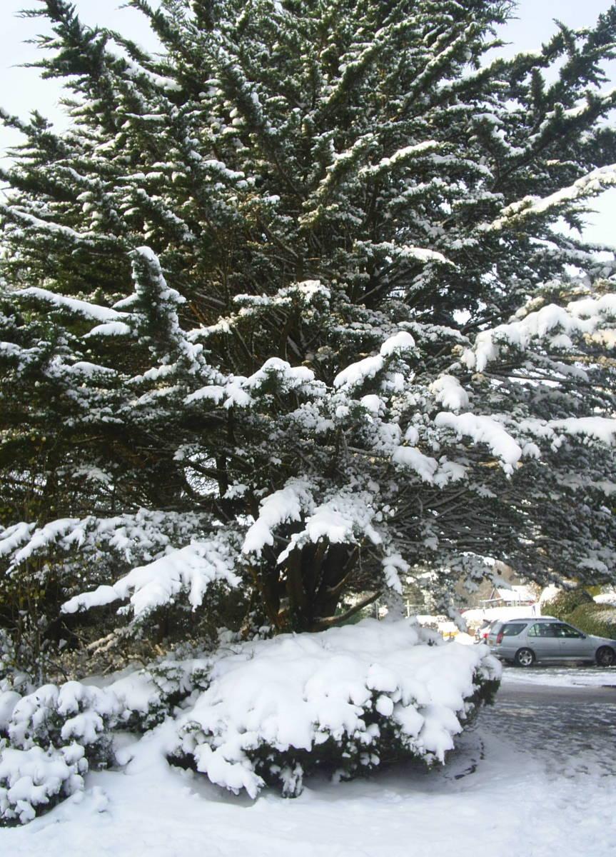 Lovely tree near where I live