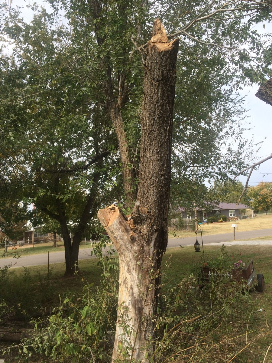 dutch-elm-disease-a-national-epidemic