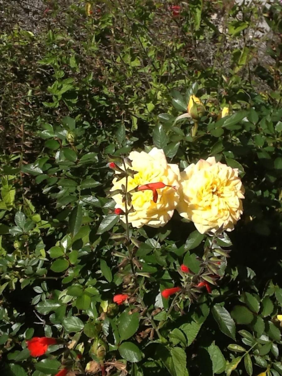 Cruel Words and Rose Thorns: a Poem (with Bonus Haiku)