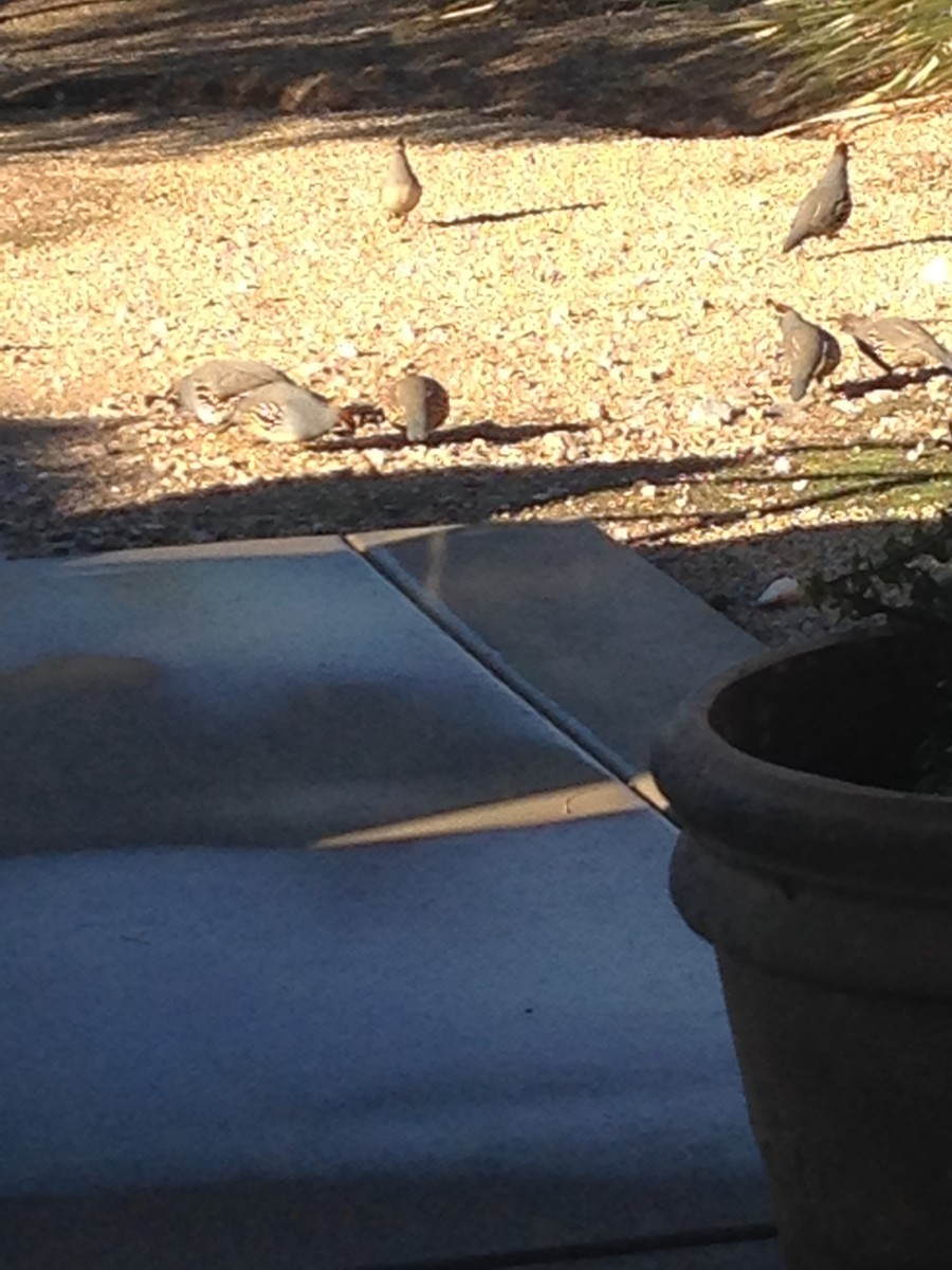 My Backyard and Its Denizens