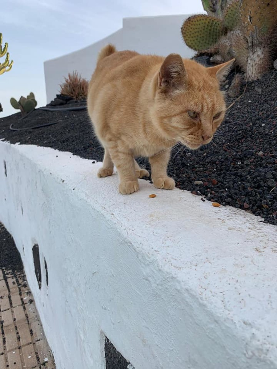 Carlos was found with tail cancer. He had his tail removed and was saved. He lives just above the marina.