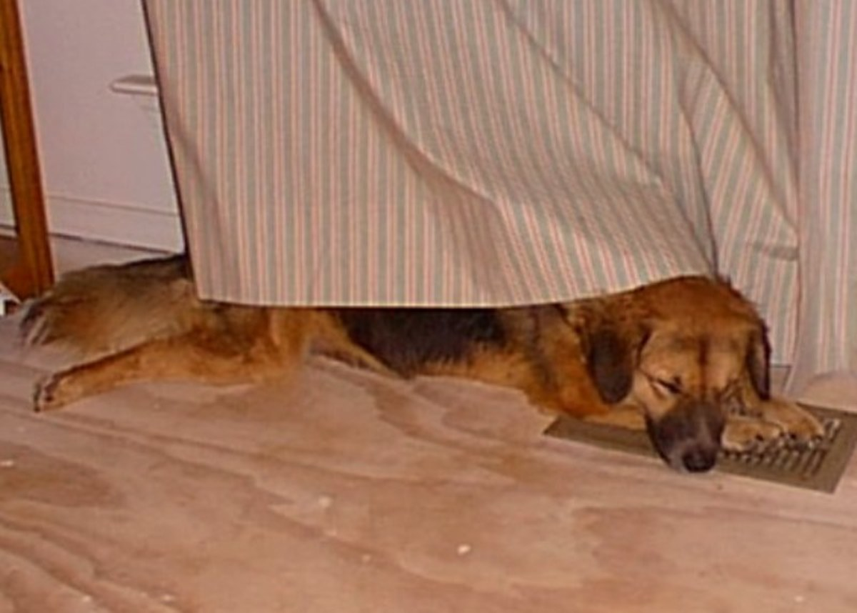 Undercover naps are a favorite pastime for Cookie.