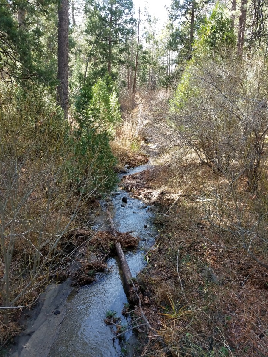 Strawberry Creek, Idyllwild, California. Nature's creative work nourishes the spirit with joy.